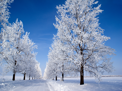 trees and snow landscape