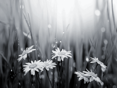 black and white spring wallpaper, art photography