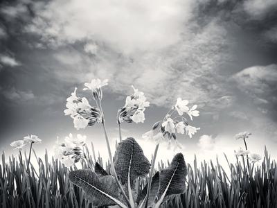 clouds sky plants