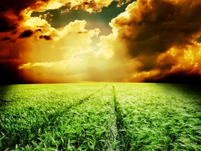 moody, field, farm, storm clouds, barley, green