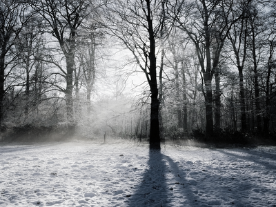 photography, landscape, nature, forest, snow