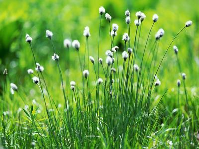 green, nature,