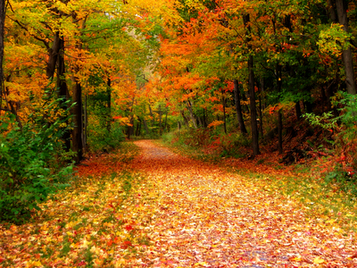 fall, autumn leaves, park, nature