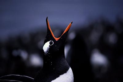 wildlife, antarctic, birds, natural history