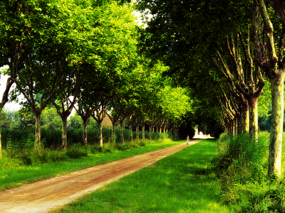 summer, country road, green, nature