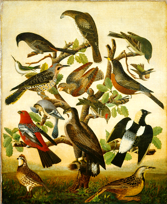 Birds, American paining c. 1840 century oil on canvas